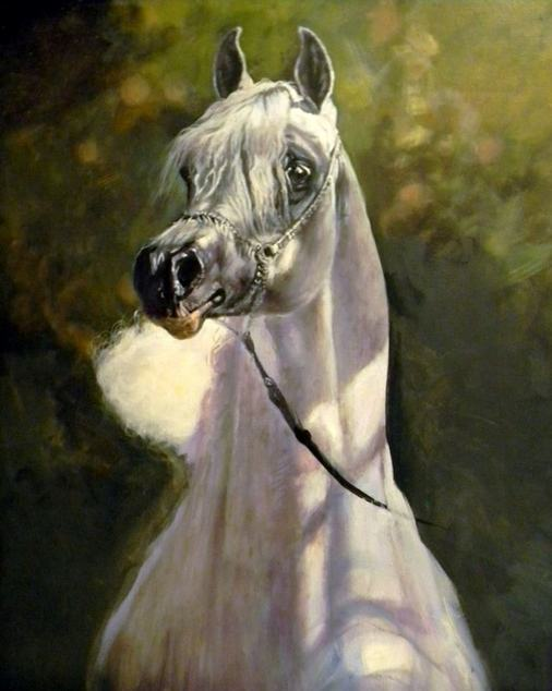 Arab Horse Paintings for Sale