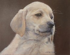 Dog Portraits Commissions